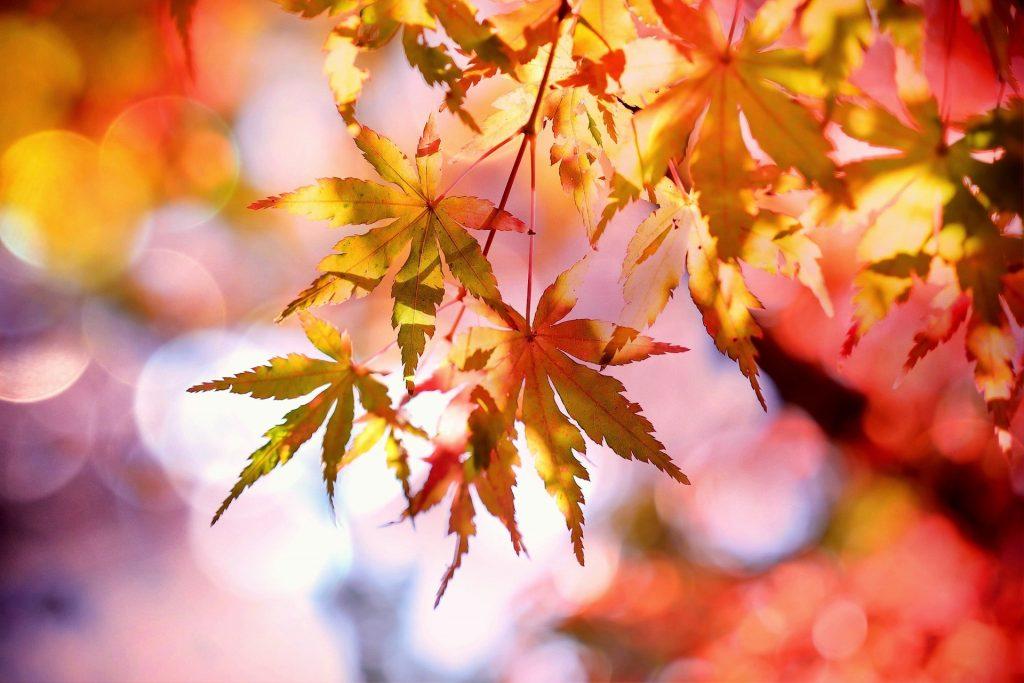 Herbsturlaub  24.10-2.11.2020